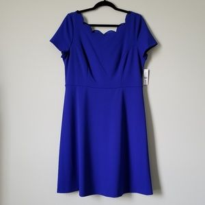 NWT Cobalt Blue Eyelet Dress